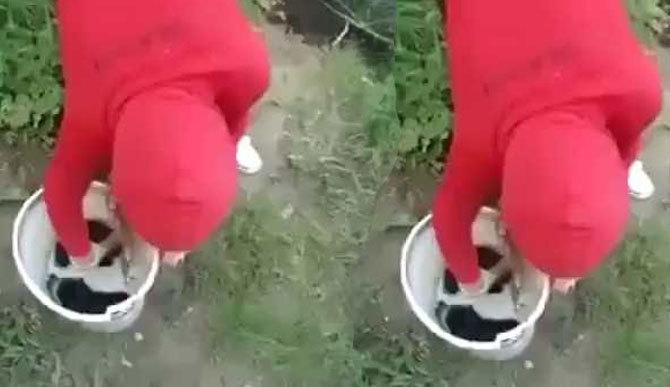 Người phụ nữ đang tâm ném 6 chú chó con xuống sông