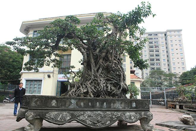 Đổi 8 lô đất Hà Nội giá triệu USD lấy cây sanh cổ nhất châu Á