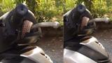 Rùng mình thấy con rắn nằm gọn trong xe máy