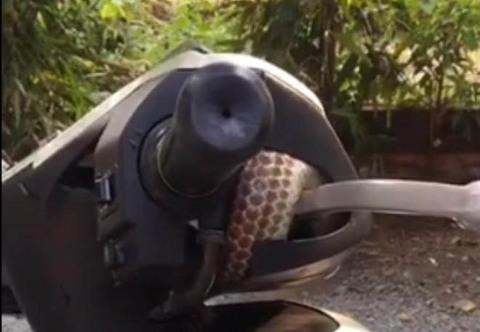 'Hết hồn' rắn hổ chui vào Honda SH