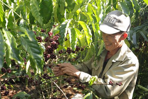 Phát triển nông nghiệp bền vững: Kinh nghiệm từ NESCAFÉ Plan