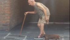 Hình ảnh xúc động chú chó bám sát chủ từng bước