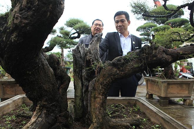 Vườn cây triệu đô của 'ông vua phi lao đất Bắc'