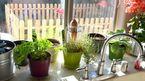 Những cây trồng hợp phong thủy trong nhà bếp