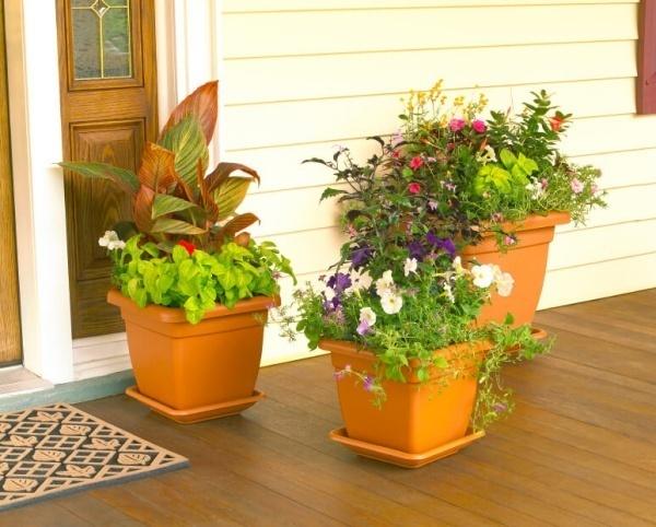 nhà đẹp,trang trí nhà,trang trí cửa nhà,trồng cây cảnh trước nhà