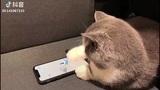 """Kinh ngạc chú mèo chơi game trên điện thoại vô cùng """"chuyên nghiệp"""""""