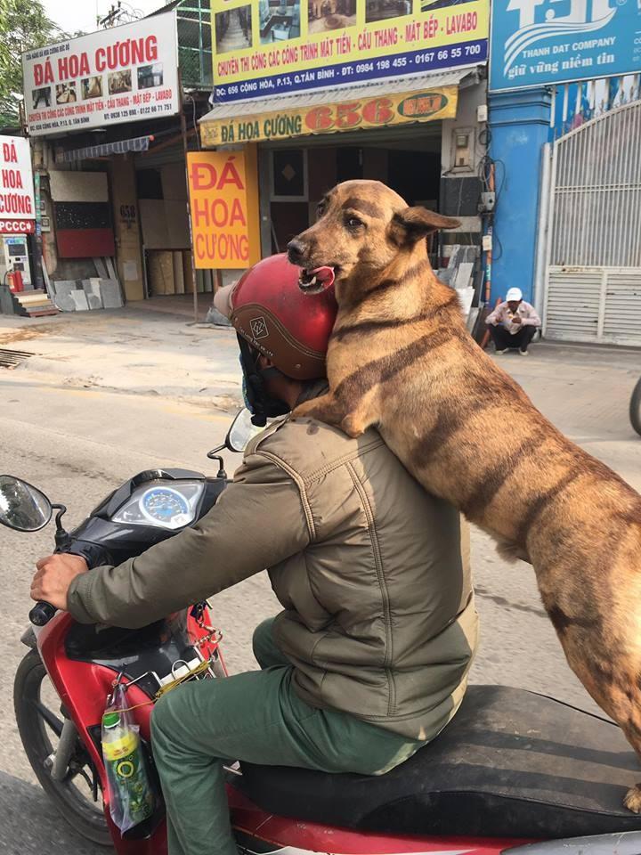 Chú chó