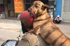"""Chú chó """"chất lừ"""" biết tạo dáng, ngao du cùng chủ đi khắp phố phường"""
