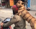 """Chú chó ngồi sau xe máy lè lưỡi cực yêu """"gây bão"""" mạng"""