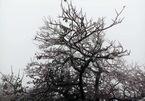 Dự báo thời tiết 10/1: Hà Nội rét nhất 2 năm, núi cao nguy cơ có tuyết