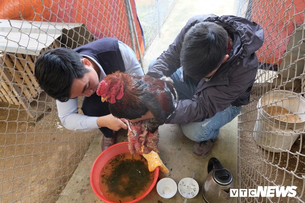 30 triệu mua con gà Đông Tảo chân to bằng tay người lớn biếu Tết