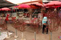 Ngắm đào Nhật Tân khoe sắc sớm trên phố Hà Nội