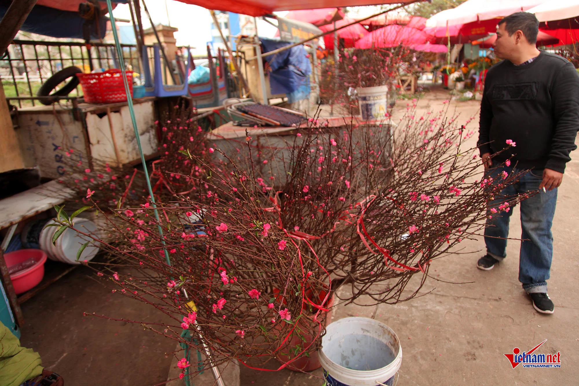 Đào Nhật Tân,hoa đào,Hà Nội