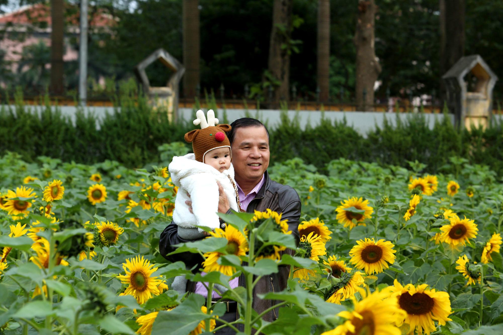 hoa hướng dương,Hà Nội,Hoàng Thành Thăng Long