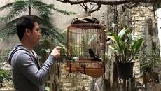 Thú chơi chim của ca sĩ Trọng Tấn