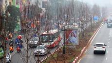 Hà Nội trồng hàng trăm cây phong lá đỏ giữa phố lớn