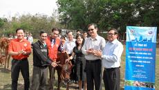 Cô gái Hà Lan tặng bò cho dân nghèo Tây Ninh
