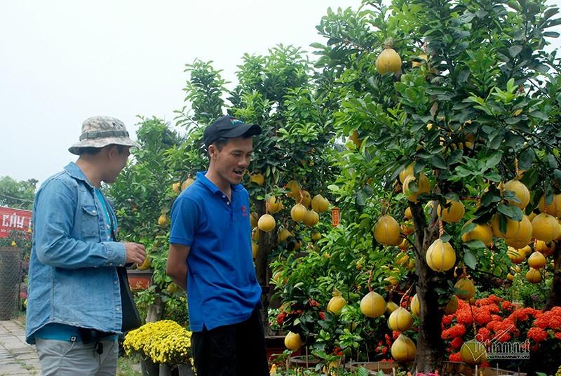 Bưởi Diễn vào Sài Gòn: 30 triệu đồng/cây trưng Tết