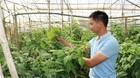 Trồng cây siêu thực phẩm, 8x Đà Lạt thu 1 tỷ đồng