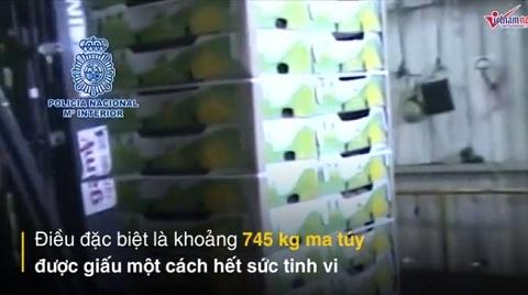 Giấu hàng trăm cân ma túy trong... những quả dứa