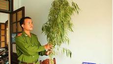 Người đàn ông quốc tịch Mỹ trồng cần sa trong nhà