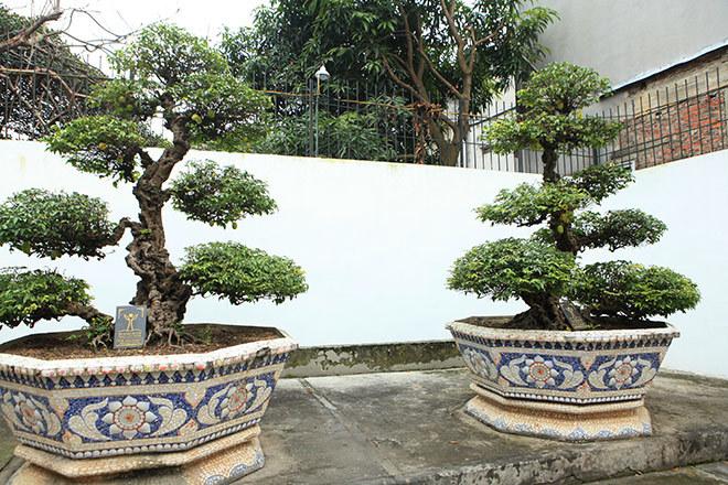 Cặp khế 300 tuổi giá 15 tỷ: Lưu danh dân chơi đất Việt