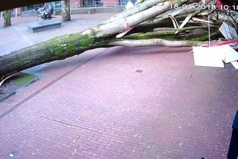 cây đổ