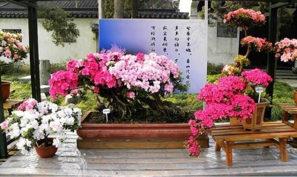 nhà đẹp,trang trí nhà,hoa đỗ quyên,decor nhà