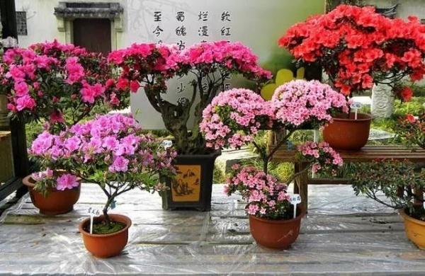 Hoa đỗ quyên hot quá và đây là '1001' cách decor nhà cực lãng mạn với loài hoa này
