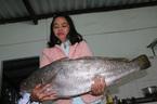 Bắt được cá lạ nghi sủ vàng quý hiếm dài gần 1m