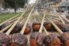 Hà Nội: Tổng giám đốc bị 'nhắm' gạch vào đầu vì trồng cây