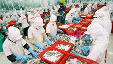 Đại gia thủy sản vỡ trận: Nợ 10 ngàn tỷ, lỗ nặng 700 tỷ