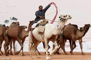 Hàng loạt lạc đà không được thi sắc đẹp vì dùng chất căng da