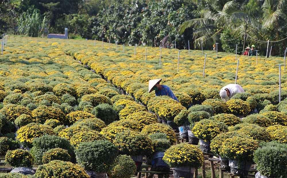 làng hoa Sa Đéc,Tết nguyên đán,Đồng Tháp