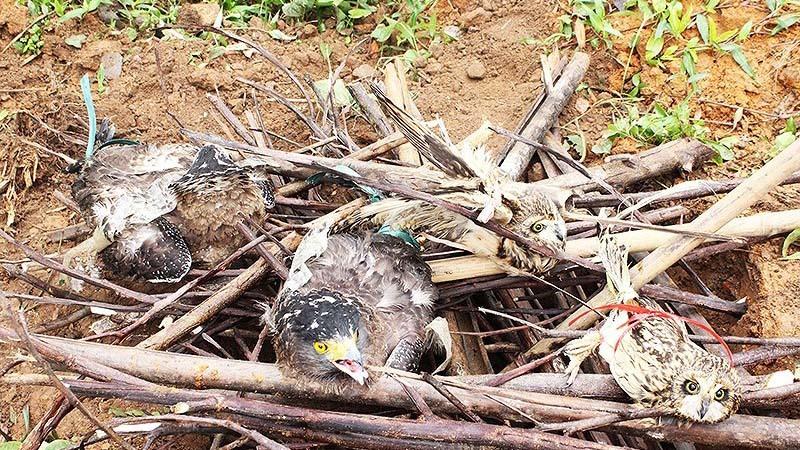 Thực hư chim quý hiếm bị tiêu hủy ở Quảng Ninh