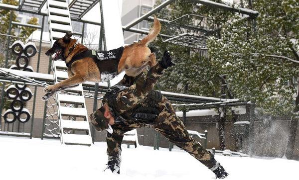 Xem cảnh sát TQ luyện chó nghiệp vụ giữa tuyết trắng