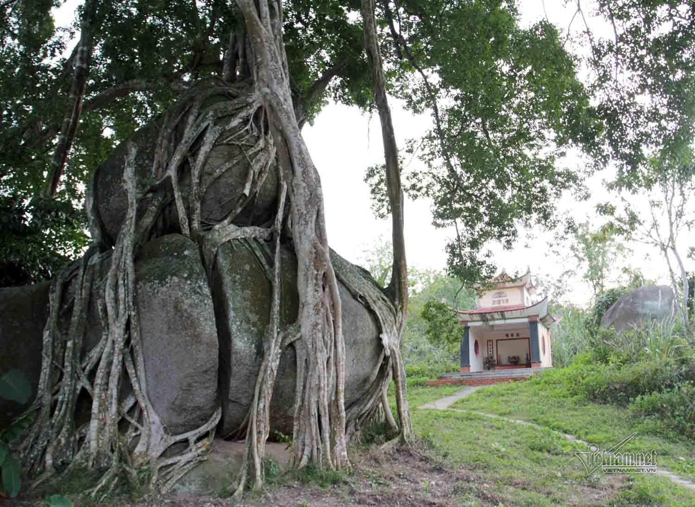 cây sanh,Nghệ An,Tết Việt 2018,Tết Nguyên đán,Tết Mậu Tuất 2018
