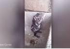 Xem chuột con tắm rửa, xát xà phòng kỳ cọ như người
